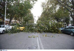 Πτώση δέντρου στο δρόμο προς Δρέπανο (+ΦΩΤΟ)